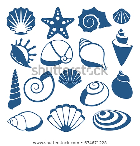 Foto d'archivio: vector set of sea shell