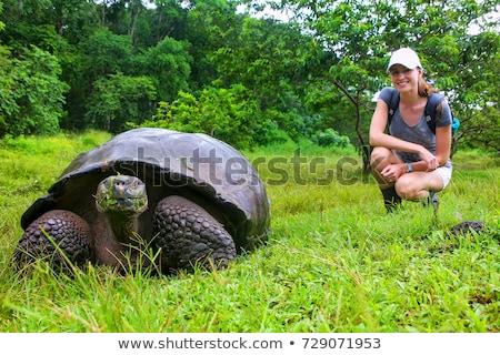 Gigante tartaruga mangiare erba isola Foto d'archivio © Maridav