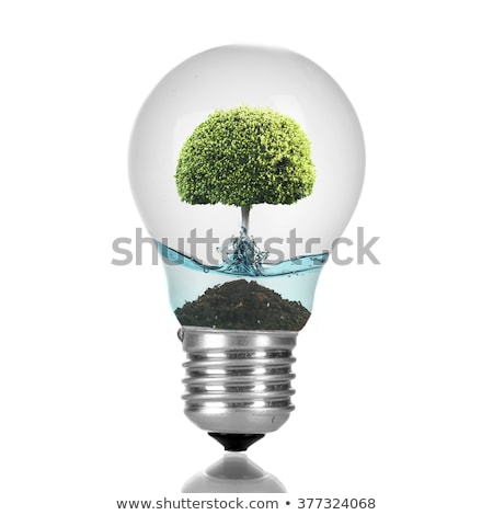 eco concept: Lightbulb with tree growing inside  Stock photo © kbuntu