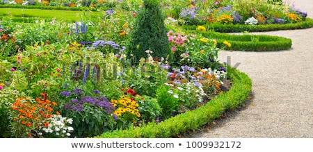 flowerbed with different flowers stock photo © borisb17