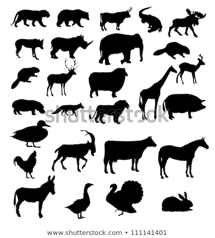 snake collection of wild danger animal set vector stock photo © pikepicture