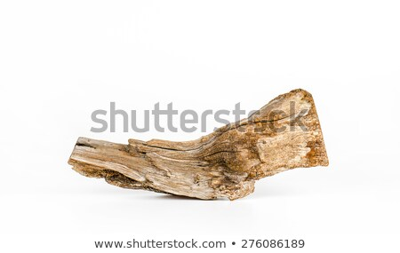 Stock photo: Driftwood tree stump on white background
