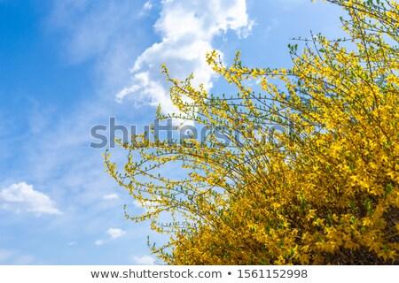 небе · весны · природы · фон · завода · парка - Сток-фото © juniart