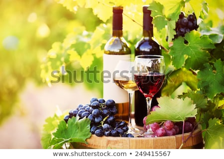 Bottle of wine and grapes and leaves. Stock photo © justinb