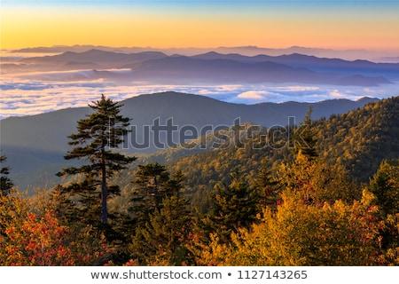 muhteşem · dumanlı · dağlar · park · şaşırtıcı · görmek - stok fotoğraf © benkrut