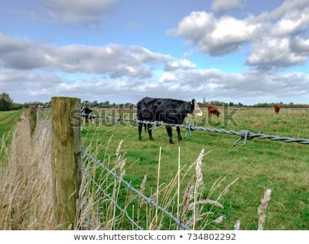 Vee prikkeldraad hek woestijn boerderij noordelijk Stockfoto © PixelsAway