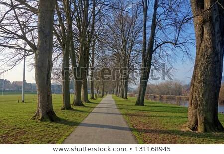 inverno · árvores · árvore · madeira · pôr · do · sol · paisagem - foto stock © latent