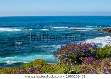 Virág bokor tenger part tájkép virágok Stock fotó © mahout