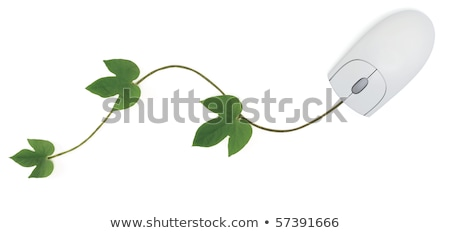 Stock photo: Eco friendly buttons - Scroll