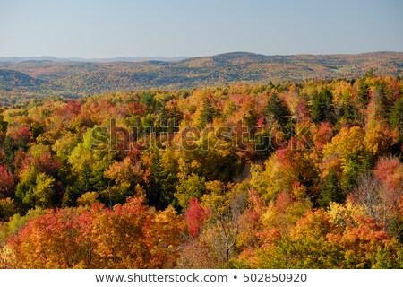 Renkli akçaağaç ağaçlar Vermont sonbahar Stok fotoğraf © DonLand