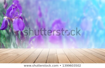 Beautiful Purple Flower against the Green Blurred Background Stock photo © maxpro