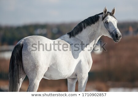white horse standing on a road stock photo © rhamm