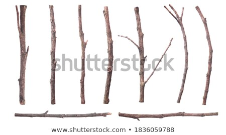 dried dead trunk falled in snow stock photo © lunamarina