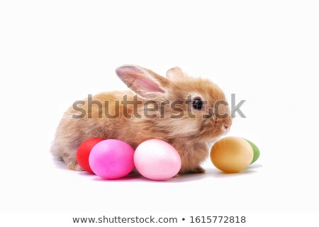 искусства · Пасху · ребенка · кролик · пасхальных · яиц · весны - Сток-фото © taden