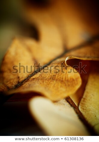 Oak Leaf Macro Shot Abstract Autumn Background Very Shallow D Foto stock © pashabo