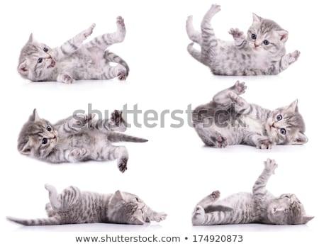 котенка играет серый лице фон оранжевый Сток-фото © c-foto