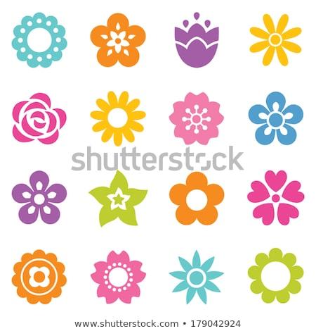 набор цветы вектора иконки дизайна Сток-фото © elenapro