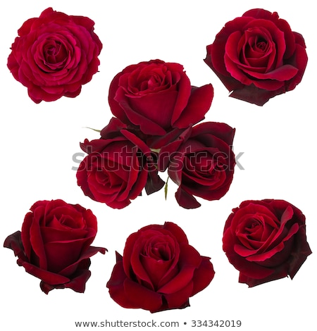 明るい · バレンタインデー · 心 · バラ - ストックフォト © carenas1