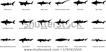 Blue Shark Silhouettes Stock photo © derocz