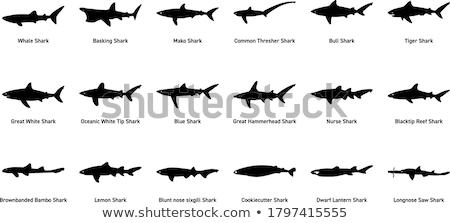 rekina · temat · kolekcja · morza · sztuki · zwierząt - zdjęcia stock © derocz