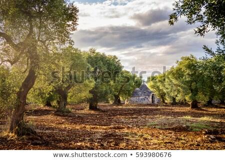 Eski zeytin ağaçlar çiçekler gökyüzü yol Stok fotoğraf © compuinfoto