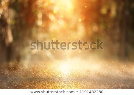 クリスマスツリー 日没 市 森林 太陽 自然 ストックフォト © inoj