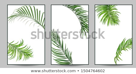 stylish floral banners set of three stock photo © sarts