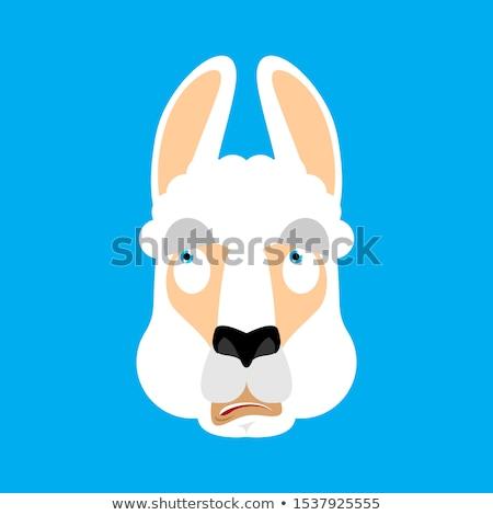 Alpaka mylić emocje zwierząt bestia Zdjęcia stock © popaukropa