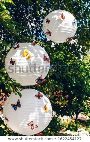 üç afişler gece kelebekler dikdörtgen biçiminde Stok fotoğraf © blackmoon979