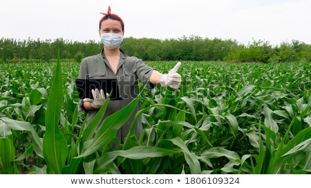 GMO Crops Stock photo © Lightsource