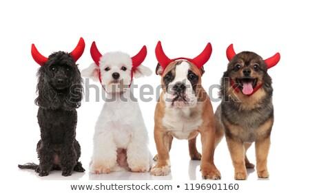 dört · mutlu · köpekler · şeytan - stok fotoğraf © feedough