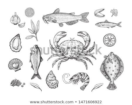 Istiridye posterler ayarlamak istiridye deniz ürünleri malzemeler Stok fotoğraf © robuart