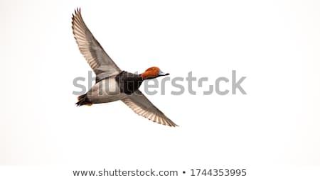 repülés · Saskatchewan · Kanada · kék · ég · természet · tó - stock fotó © pictureguy