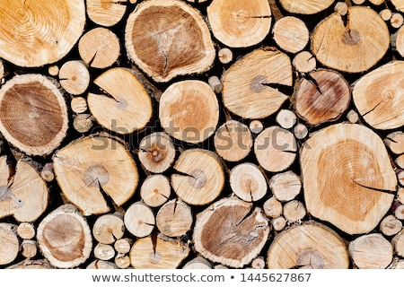 pine logs stacked in a pile stock photo © ruslanshramko
