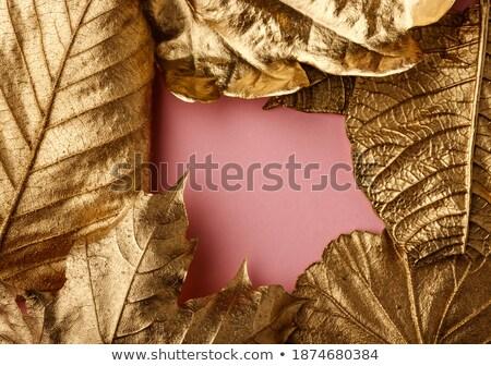 Naturalismo folha padrão traçado cor ano Foto stock © artjazz