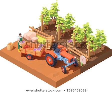 Harvest Grapes, Winemaker and Bush, Farm Vector Stock photo © robuart