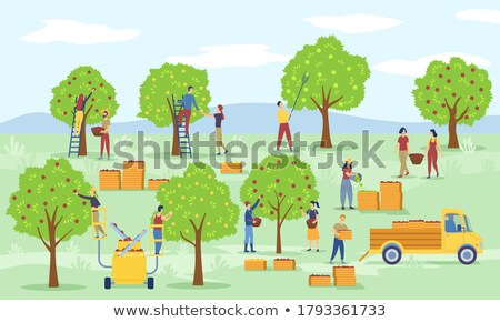 Workers in Orchard, Ripe Apples, Transport Vector Stock photo © robuart