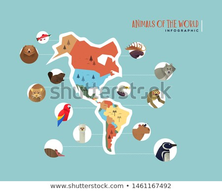 America continent wild animal infographic template Stock photo © cienpies