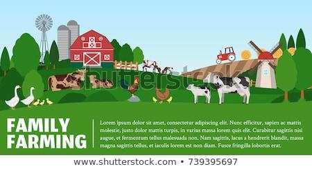 Oie chiches ferme vecteur agriculture Photo stock © robuart