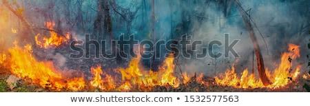 燃焼 · 木材 · 石炭 · 暖炉 · クローズアップ · ホット - ストックフォト © paha_l