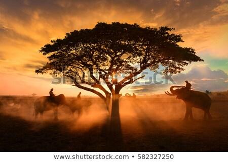 Baba narancsfa mező csetepaté mediterrán Valencia Stock fotó © lunamarina