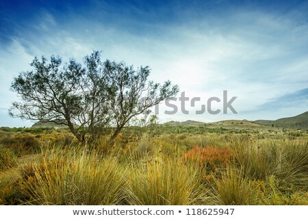 Tree near sand dunes in the desert, Spain, Andalucia, Almeria Stock photo © Fesus