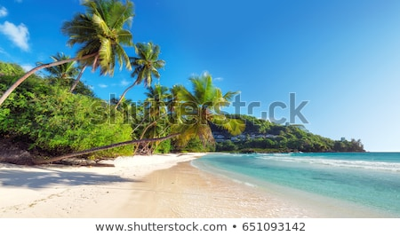Eau arbre paysage mer Palm palmier Photo stock © phbcz
