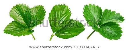 Truskawki liści żywności charakter lata owoce Zdjęcia stock © M-studio