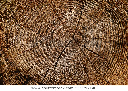 Rotten end face of a pine log background Stock photo © pzaxe