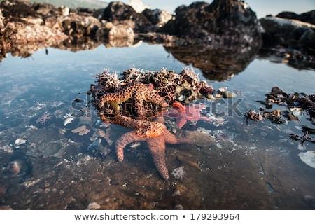 Mare vita marea piscina rocce costa Foto d'archivio © wildnerdpix