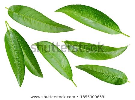 персика листьев белый продовольствие природы лист Сток-фото © Masha