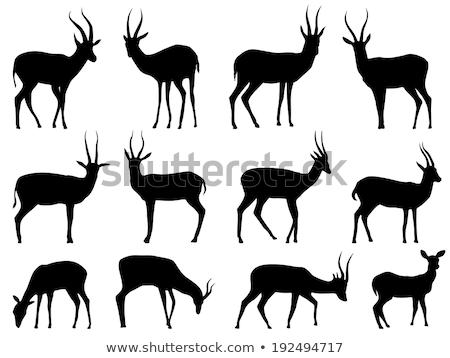 Antelope Silhouettes Stock photo © derocz
