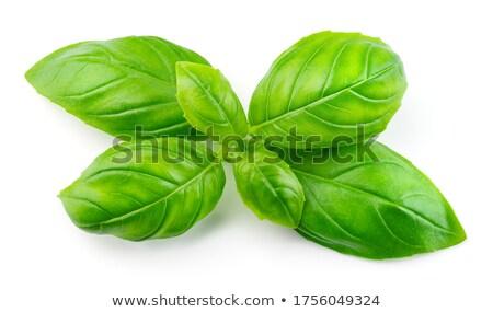 basilicum · gesneden · tuin · vers · voedsel · aarde - stockfoto © shawnhempel