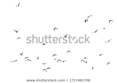 white seagull flying stock photo © mikko
